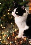 Luces lindas del gato y de la Navidad Imagenes de archivo