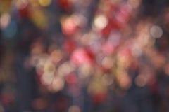 Luces multicoloras hermosas en bosque del otoño Imágenes de archivo libres de regalías