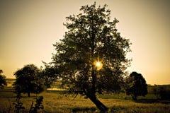 Luces a través del árbol imágenes de archivo libres de regalías