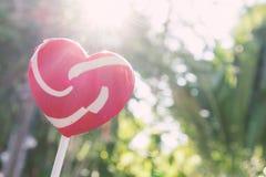 Lucette rouge douce de coeur avec la lumière du fond du soleil et de nature Photo libre de droits
