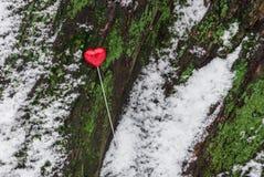 Lucette rouge en forme de coeur sur l'arbre Images stock