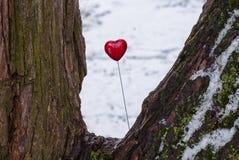 Lucette rouge en forme de coeur sur l'arbre Image stock