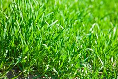 Luch green grass Stock Photography