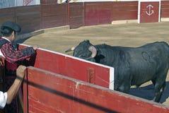 Lucha de Bull Imagenes de archivo