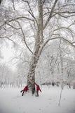Lucha de la bola de la nieve Imágenes de archivo libres de regalías