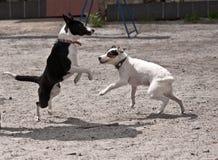 Lucha de perro Imágenes de archivo libres de regalías