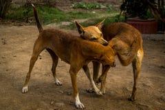 Lucha de perro Fotografía de archivo