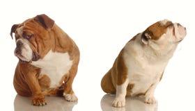 Lucha de perro Fotografía de archivo libre de regalías