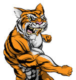 Lucha del carácter del tigre Foto de archivo libre de regalías