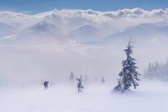 Lucha para la supervivencia en montañas del invierno foto de archivo libre de regalías