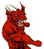 Lucha roja de la mascota del dragón Foto de archivo libre de regalías