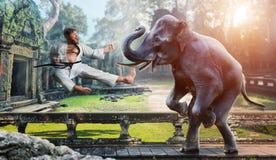 Luchas de Karateka con el elefante Fotografía de archivo libre de regalías