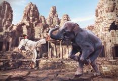 Luchas de Karateka con el elefante Imágenes de archivo libres de regalías