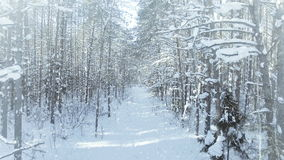 LUCHT Bevroren de winter bos dicht, bosstruikgewas, met aardige sneeuwval en zon 4k uhd stock footage