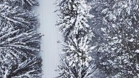 Lucht bevroren pijnboom en sparren in de sneeuw in de winter stock footage