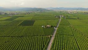 Lucht de wijngaardendruif van bossengebieden stock video