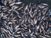 Lucht dichte omhooggaand van zeeleeuwkolonie royalty-vrije stock foto's