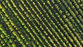 lucht E Landbouwachtergrond royalty-vrije stock foto