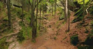 Lucht geschoten mooi landschap met bos en klip stock video