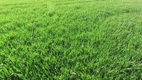 lucht Groen gras stock videobeelden