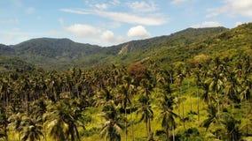 Lucht het eilandlandschap van de hommelmening, kokospalmaanplantingen, Thailand Natuurlijke idyllische paradijsscène Bergheuvel stock footage