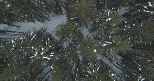 Lucht hoogste mening over het bos van de de winterspar Stock Afbeelding