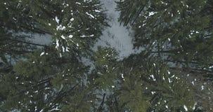 Lucht hoogste mening over het bos van de de winterspar Royalty-vrije Stock Fotografie