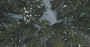 Lucht hoogste mening over het bos van de de winterspar Stock Afbeeldingen