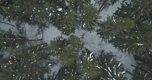 Lucht hoogste mening over het bos van de de winterspar Stock Fotografie