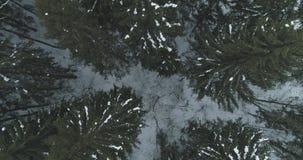 Lucht hoogste mening over het bos van de de winterspar Stock Foto's