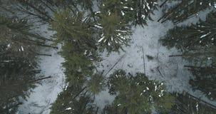 Lucht hoogste mening over het bos van de de winterspar Royalty-vrije Stock Afbeelding