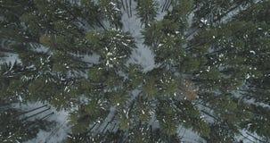 Lucht hoogste mening over het bos van de de winterspar Royalty-vrije Stock Foto's