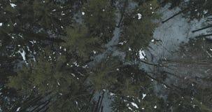 Lucht hoogste mening over het bos van de de winterspar Royalty-vrije Stock Foto