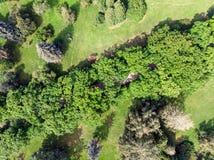 Lucht hoogste mening van gebied met bomen en het lopen weg in stadspari Stock Foto