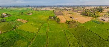 Lucht hoogste meningsfoto van vliegende hommel van groene padievelden in plattelandsland met gekweekte installaties van padie bal royalty-vrije stock afbeeldingen