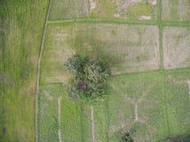 Lucht ingediende beeld Thaise rijst Stock Fotografie