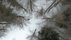 Lucht luchtestablisher van de hommelvlucht over de skiërmens die in sneeuw boshout ski?en De wintersneeuw in bergaard stock footage