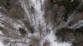 Lucht luchtestablisher van de hommelvlucht over de skiërmens die in sneeuw boshout ski?en De wintersneeuw in bergaard stock videobeelden