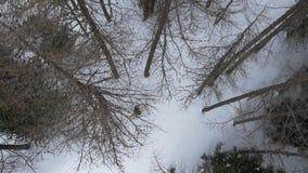 Lucht luchtestablisher van de hommelvlucht over de skiërmens die in sneeuw boshout ski?en De wintersneeuw in bergaard stock video