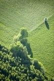 Lucht Mening: Één boom die op een gebied wordt geïsoleerdc Stock Afbeeldingen