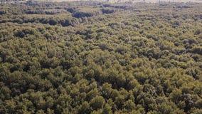 Lucht Mening Het vliegen over de mooie groene bosbomen Luchtcameraschot Landschapspanorama stock video