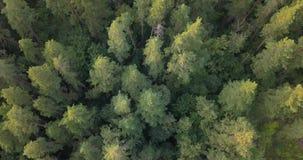 Lucht Mening Het vliegen over de mooie zonnige bosbomen Landschapspanorama stock footage