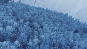 Lucht mening van de winterbos stock footage