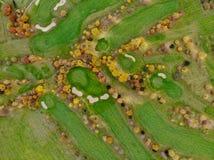 Lucht mening van een golfcursus royalty-vrije stock foto