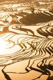 Lucht overweldigende mening van Yuanyang-Rijstterrassen bij zonsopgang, het mannetje dat van stamhani in de rijstterrasvormige aa stock afbeelding