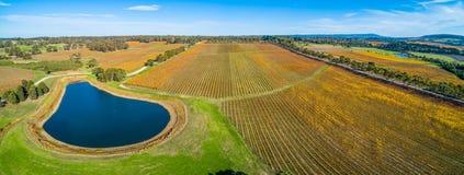 Lucht panoramisch landschap van wijngaard stock afbeelding