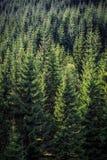 Lucht verticaal landschap van een groen Europees pijnboombos in s Royalty-vrije Stock Fotografie