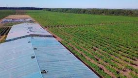 Lucht - Vlucht over de serre waarin de druiven worden gekweekt Oude serres stock footage