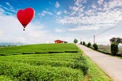 Luchtballonnen die over het landschap van de theeaanplanting vliegen royalty-vrije stock afbeelding