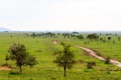 Luchtballons in het Nationale Park van Serengeti royalty-vrije stock foto